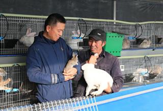 和碩縣:養殖肉兔走增收致富路