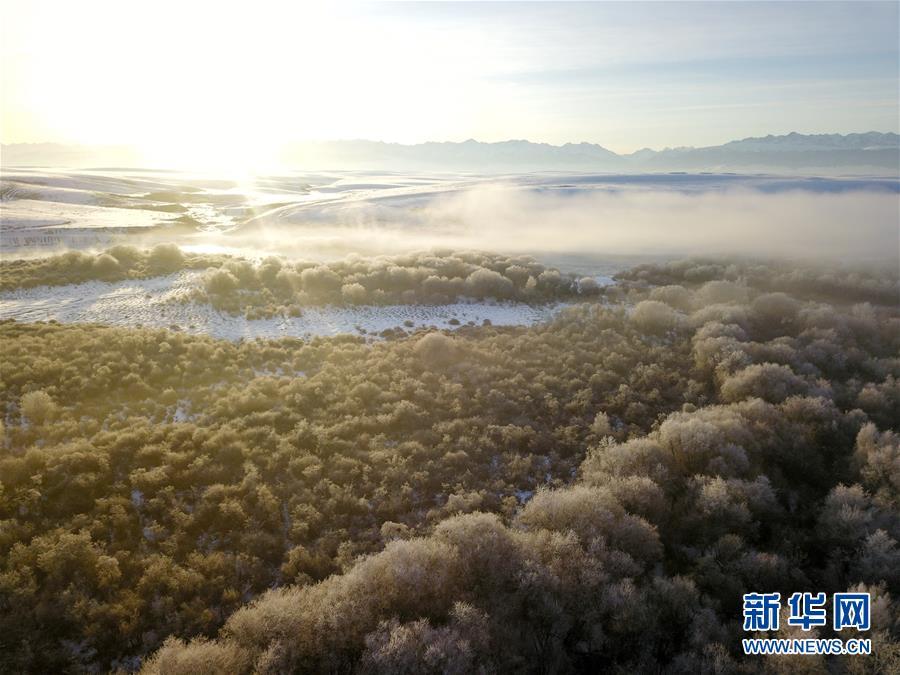 新疆昭苏:雾凇景色美如画