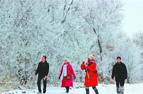 【新疆是个好地方】裕民县雪后玉树琼枝、银装素裹