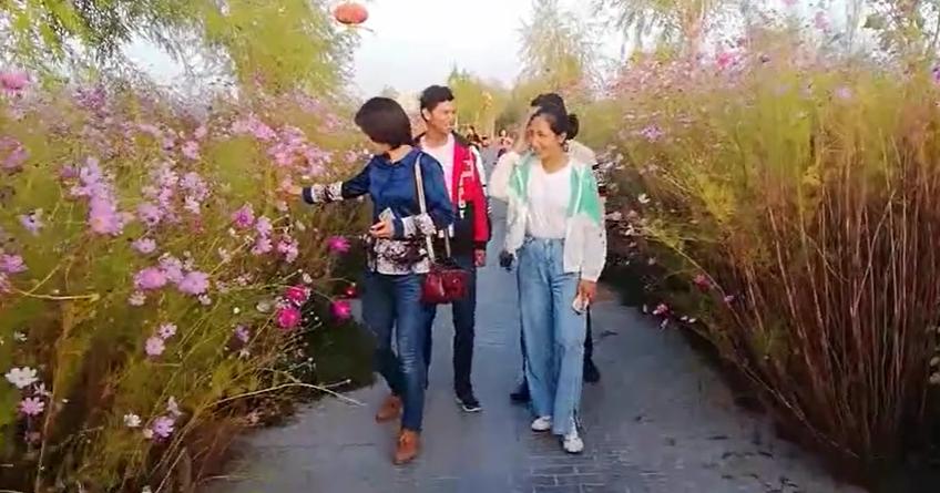 路边的野花不要采