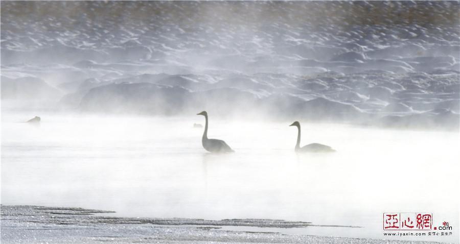 【疆遇风光】航拍和静县巴音布鲁克冬日壮美风光
