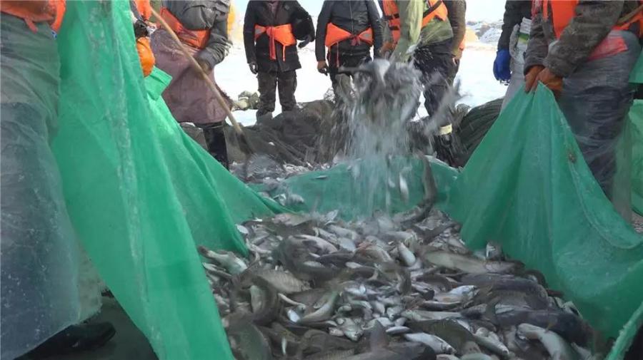 福??h烏倫古湖撒下新年第一網 出魚兩噸左右