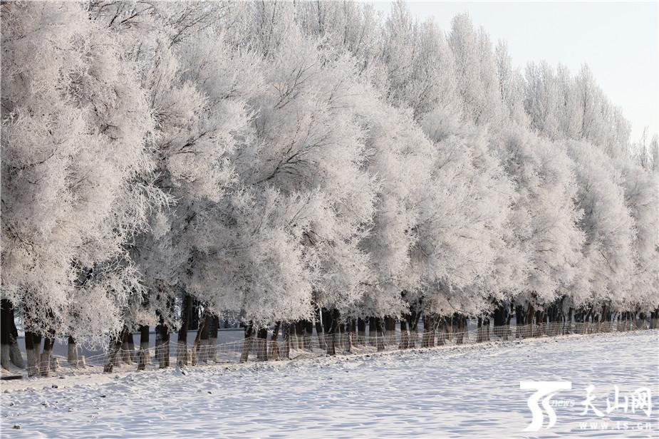 巴里坤县出现雾凇奇观
