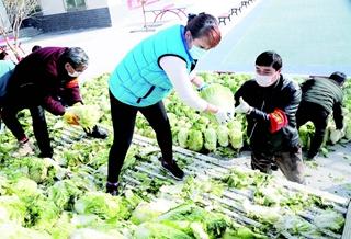 轮台县:30吨白菜免费送居民
