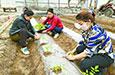 庭院种植助增收