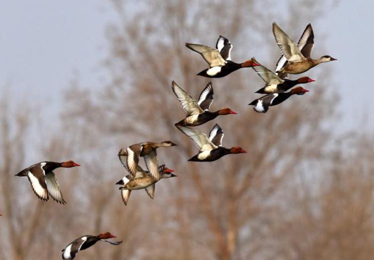 【高清组图】春日的新疆塔里木河湿地生机盎然