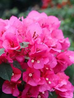 多彩花卉扮靓童话边城