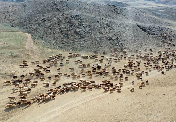 """数清""""羊单位""""——转场路上新关口 牧民生活新希望"""