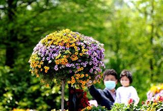 2020上海(国际)花展开幕