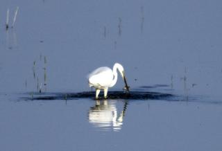 博斯腾湖:芦苇返青 候鸟翩跹