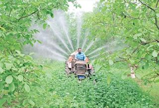 加强田间管理 促进增产增效