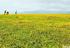 【新疆是个好地方】赛里木湖畔花如海