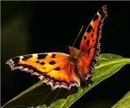 万蝶起舞迎客来
