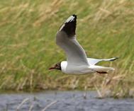 巴里坤草原湿地群鸟嬉戏