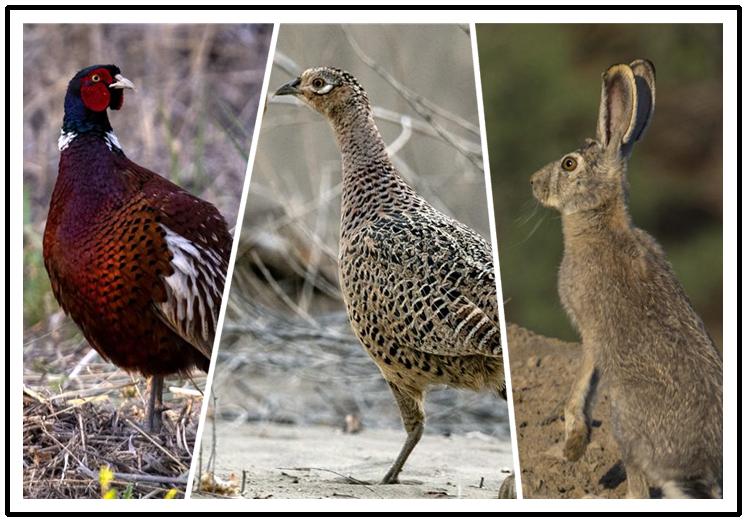 克拉玛依市林海公园:好生态引来众多野生动物