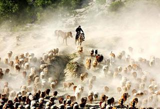 阿勒泰地区福海县:千里牧道大转场