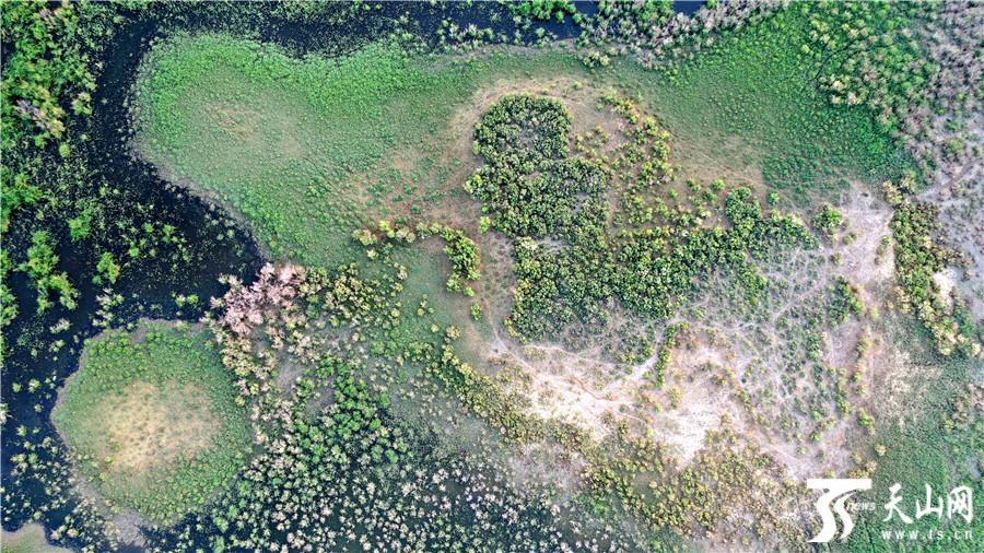 【高清组图】新疆博斯腾湖湿地群鸟嬉戏 风景如画