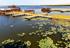 【高清组图】新疆博斯腾湖:睡莲绽放添夏景