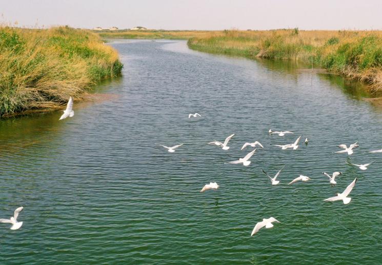 生机勃勃的巴依孜湖