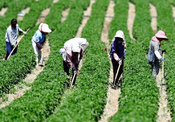 巴州:芒种时节农事忙