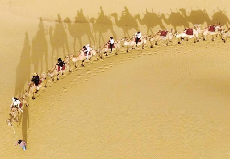 尉犁县:沙漠骑行赏驼影