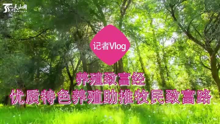 记者Vlog|养殖致富经——优质特色养殖助推牧民致富路