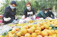 """新疆南疆深耕特色林果产业 林果业""""接二连三""""释放叠加效益"""