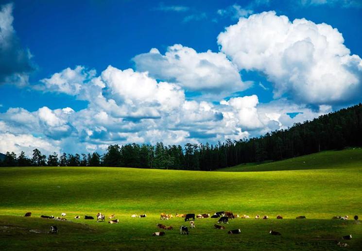 走进如诗如画的哈巴河那仁草原