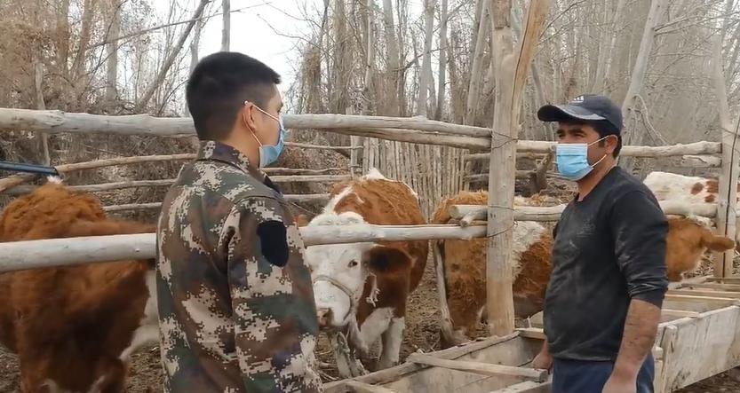 艾力和妻子在家经营养殖和农业生产,每年靠饲养牛和种植核桃、麦子,收入达到十万元