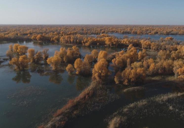 新疆轮台县生态搬迁:塔河沿岸绿了 新居村民富了