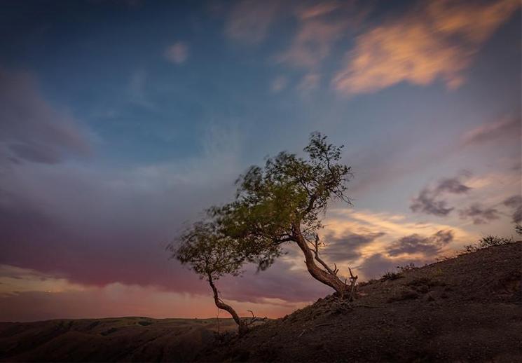 长在岩石上的树