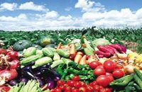 上半年新疆地产果蔬出口超7.5万吨