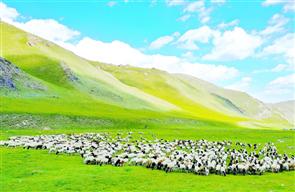 博湖县:生态牧场好风光
