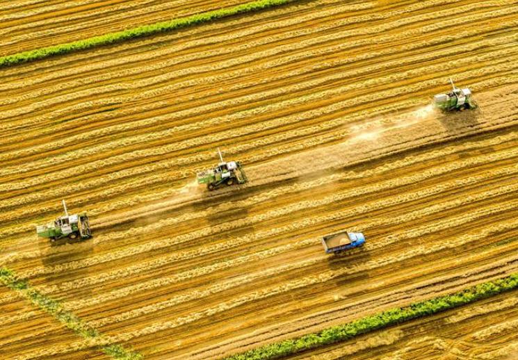昭苏县:小麦收割忙
