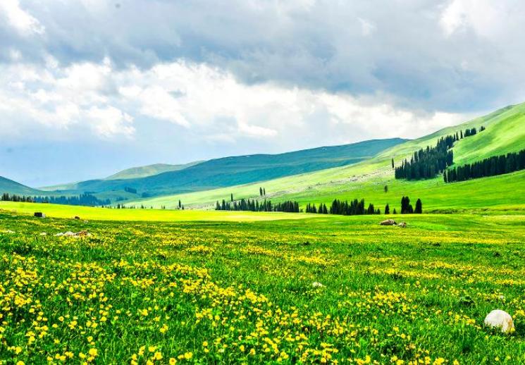 新疆唐布拉草原四季印象