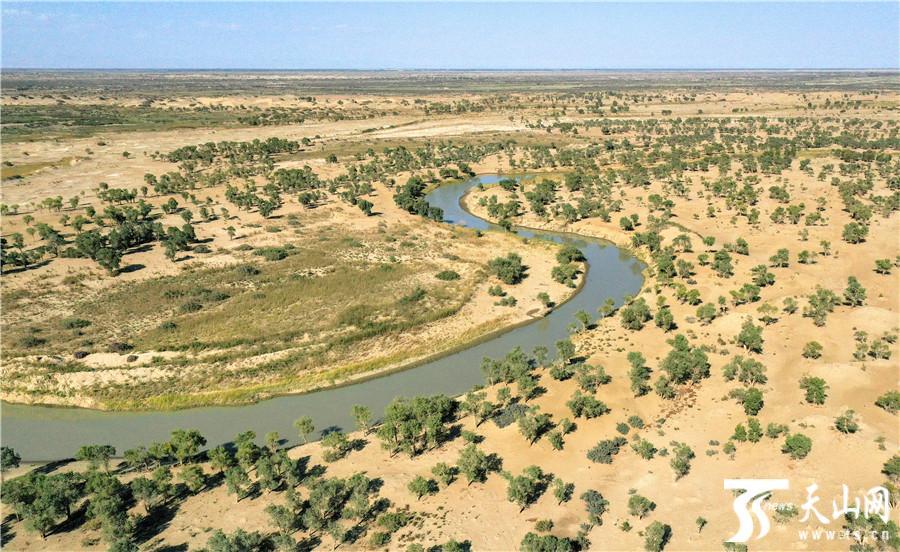 【高清组图】航拍塔河下游生态输水 两岸胡杨绿意盎然十分壮观