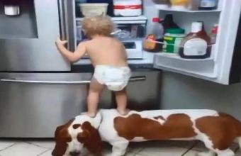 宝宝和狗狗配合偷东西,女主人突然出现,狗狗表现让人大笑!