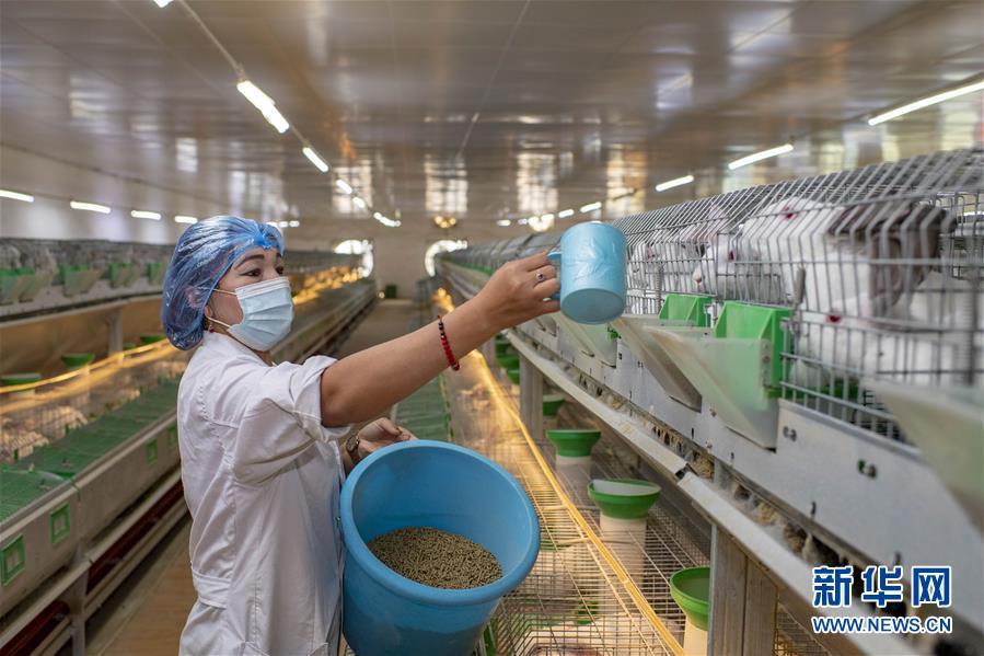 养殖产业助脱贫