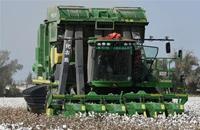 新疆棉花陆续进入大规模采收期