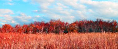 吉木乃县:红桦林红似火