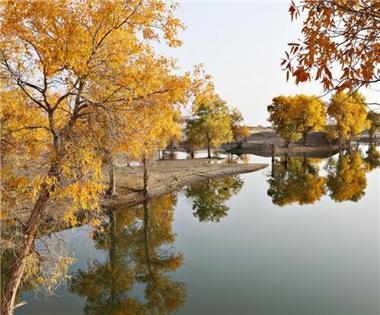塔里木河沿岸胡杨林披金装 进入最佳观赏期