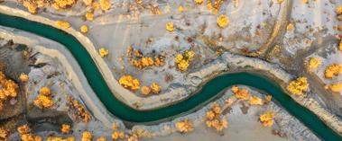 塔里木河下游金色胡杨壮美迷人