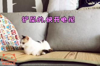 可爱的小奶猫