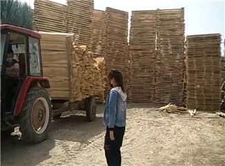 【明天更美好】塔依尔和父亲一起经营木材加工厂