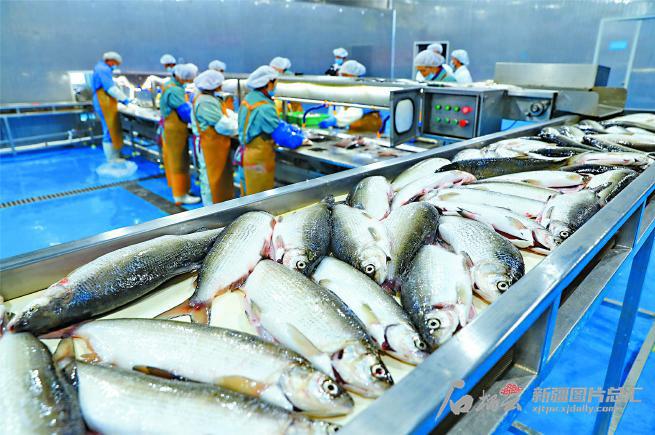 【五中全会精神在基层】从培育鱼苗到精深加工 创新托起高白鲑产业