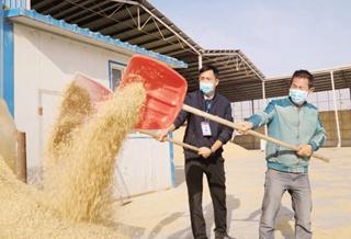 一粒稻米何以香飘万里