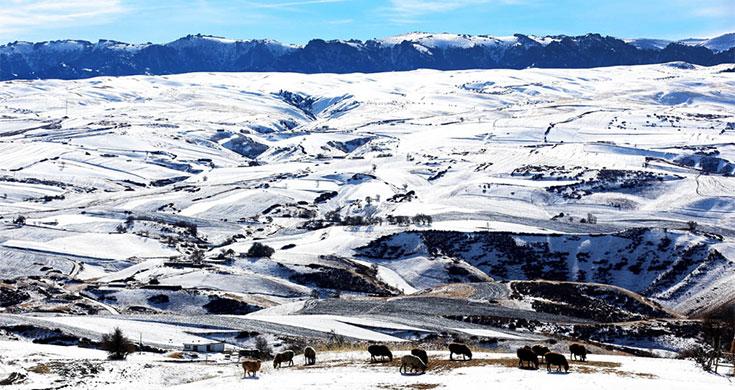 新疆木垒县:雪后山村牧羊图