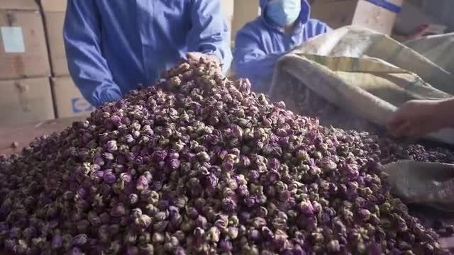 我在南疆|阿卜杜喀迪尔的致富玫瑰