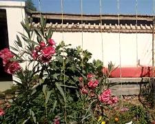 这是艾海提家的院子