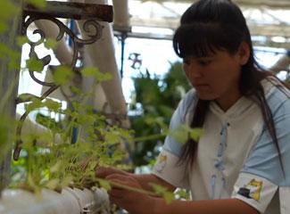 种植能手的花卉养殖记